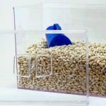 Caixa de acrílico transparente